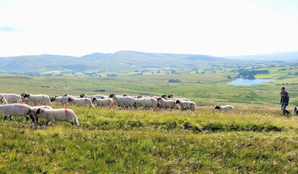 The Westmorland Dales Landscape Partnership Scheme