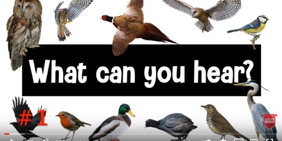Guess the Bird: British Bird Calls