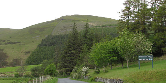 Whinlatter Forest Plan consultation