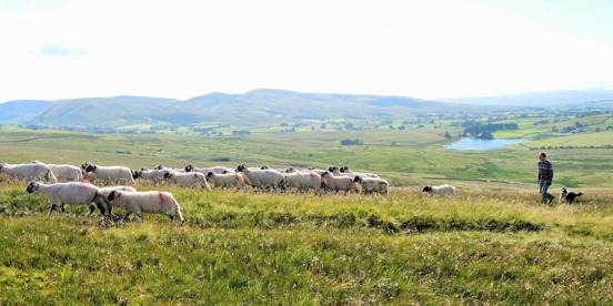 Environmental Land Management Scheme - A path to sustainable farming?